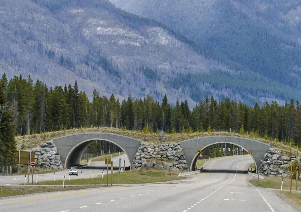 Wildlife Overpass, Banff National Park, Canada