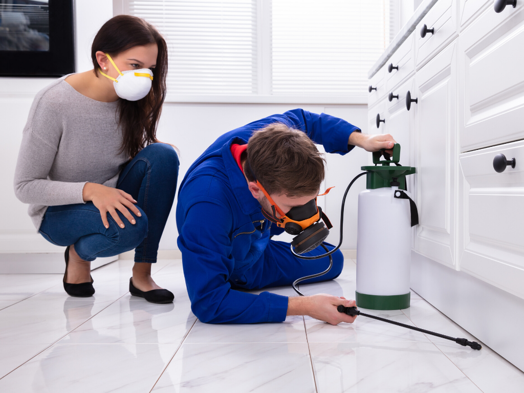 Best Pest Controllers in Singapore